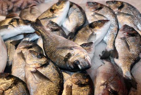 daurade: great bream caught fresh in the Mediterranean Sea on sale in fish market Stock Photo