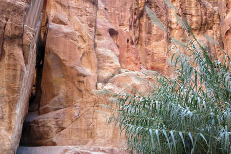 calcification: Ancient rock city of Petra in Jordan with a green plant Stock Photo