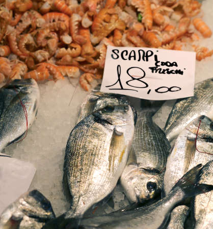 gilthead bream: scampi and gilthead bream for sale in fish market