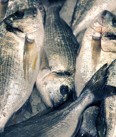 sea bream: Great sea bream on sale in the fish market