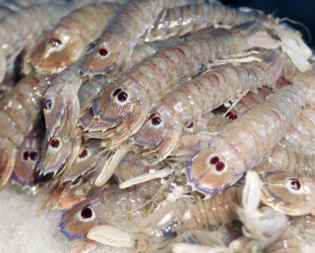 very fresh crustaceans called  mantis shrimp for sale in fish market Stock Photo