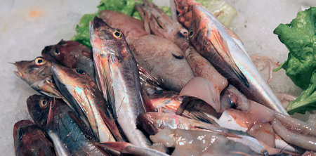 very fresh fish called Tub gurnard for sale in fish market