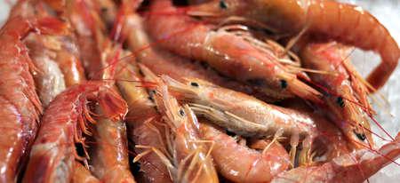 crustaceans: crustaceans for sale in the fish market