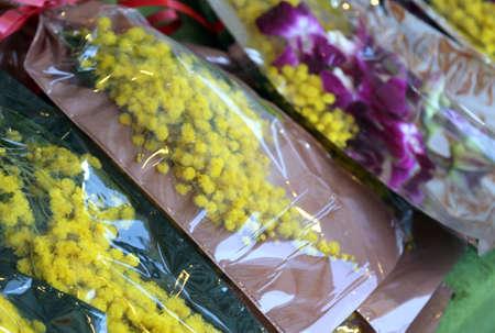 mimose: giallo mimosa e orchidea per la festa della donna l'8 marzo