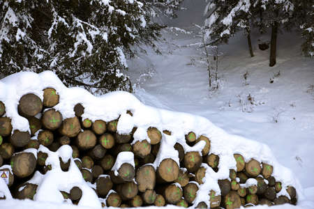 woodshed: pile of logs cut in the mountains under the snow