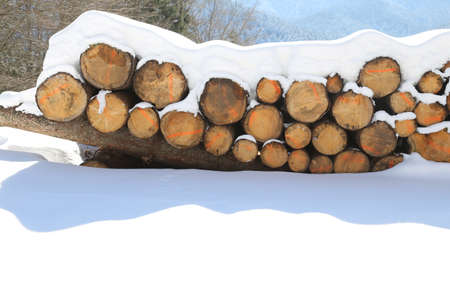 pile of logs cut in the mountains under the white snow Stock Photo