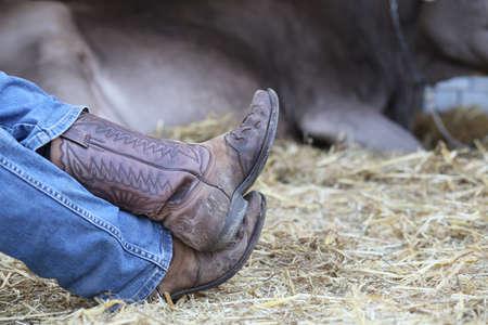 botas vaqueras: resto del vaquero cansado en el granero de la granja y una vaca en el fondo