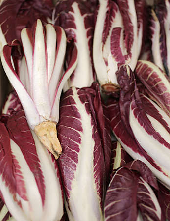late radicchio di TREVISO for sale in fruit and vegetable store