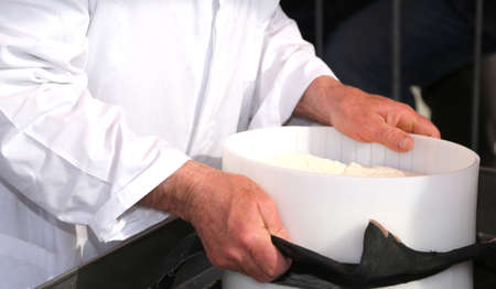 caciocavallo: old cheesemakers hands during the production of cows milk cheese in the dairy