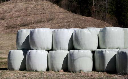 farm field: big hay bales wrapped in cellophane in farm field Stock Photo