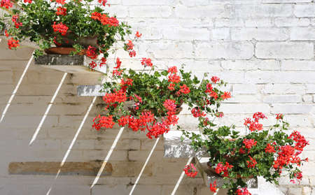 mediterranean house: Pots of Red Geraniums in the staircase of the Mediterranean House