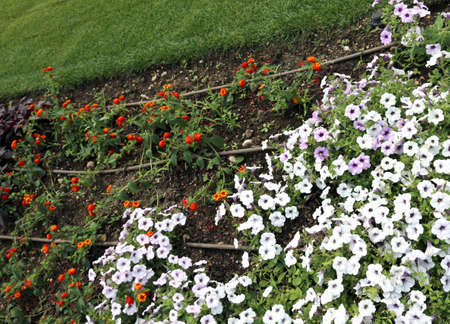 irrigation: automatic irrigation system for colorful flowers of the garden Stock Photo