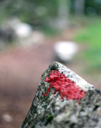 indicate: White and red paint to indicate the mountain trail in the thick forest