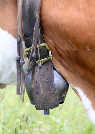 cattle breeding: large bronze cowbell cow in cattle breeding