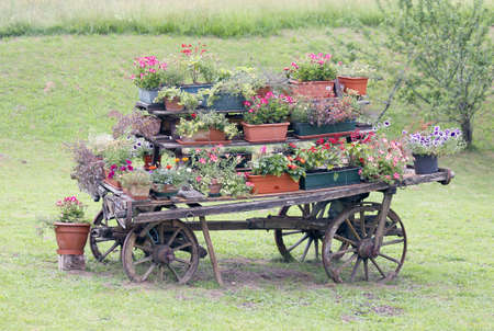 rural scene with flowers in pots during flowering in summer