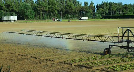 agri: automatic irrigation system in the field of green lettuce