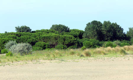 blazed: shrubs and plants typical of the Mediterranean with the sand of the desert Stock Photo