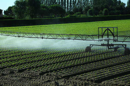 automat: automatic irrigation system in the field of green lettuce