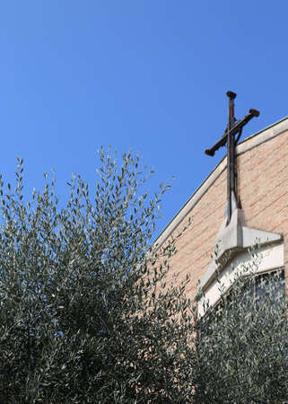 shalom: olive tree with the cross of a Christian Church in the background