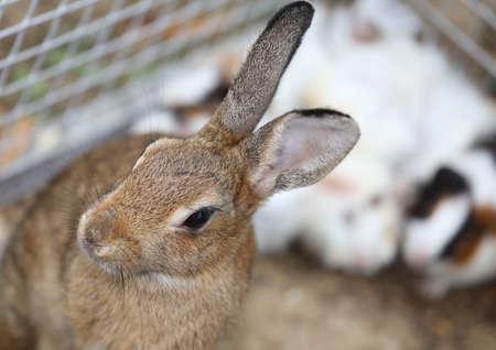 lagomorpha: little rabbit inside the Warren farm Stock Photo