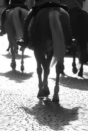 ippica: Gruppo di cavalli con i cowboy al tramonto retroilluminato