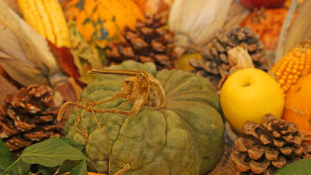 mais: pumpkin and yellow apple in autumn season