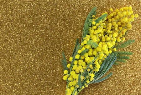 mimose: Mimosas gialli in fiore per il giorno internazionale della donna con Golden glitter background Archivio Fotografico