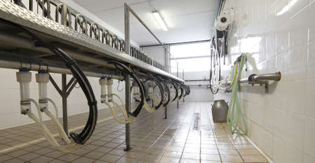 parlor: milking parlor for goats and sheep in a herd of sheep in modern farm Stock Photo