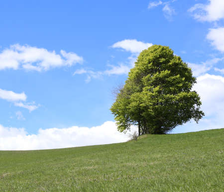 noiseless: isolated tree in the middle of the green meadow in mountains in summer