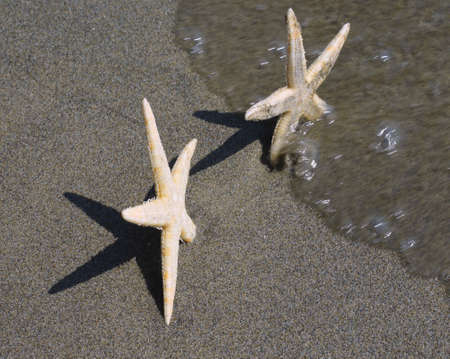 star fish: starfish asks for help to her girlfriend star fish before the wave back in the middle of the ocean