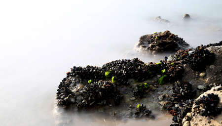 unreal: black mussels on the rocks emerge from the fog almost unreal Stock Photo