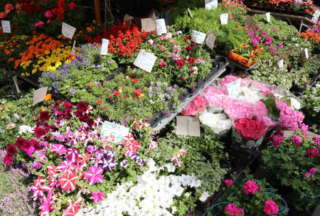 floriculture: flowers for sale in the italian market