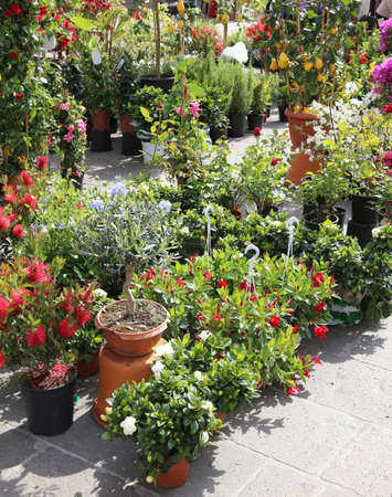 floriculture: flowers and pots for sale in the local market