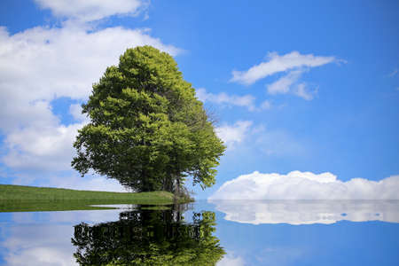 reflect: isolated tree with the alpine lake and the thick foliage in summer