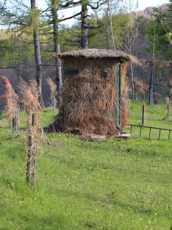 camouflaged: camouflaged wooden hut for hunting in the mountains