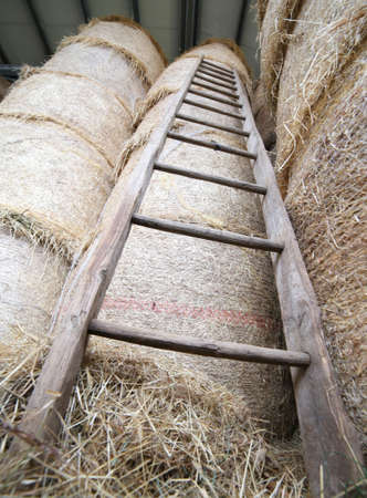 haymow: old wood ladder in the barn of the farm Stock Photo