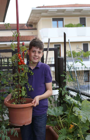 kiddy: young boy in his urban garden with red tomatoes in the plant pot on the terrace