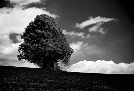 bleak: very dark bleak landscape with isolated tree in the middle of the meadow in the mountains Stock Photo