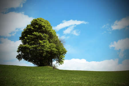 noiseless: isolated tree in the middle of the meadow in mountains in summer