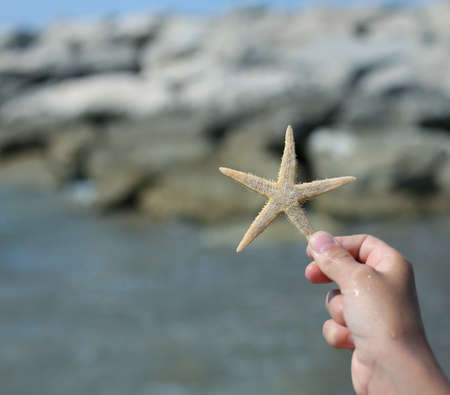 animal body part: hand of child holding big starfish close to the sea cliff in summer