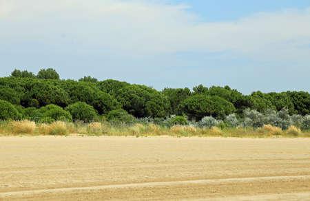 mediterranea: italian maquis shrubland with shrub and sand in summer Stock Photo