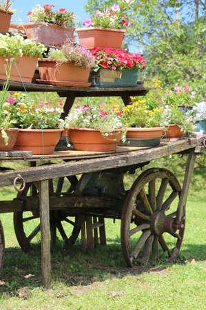 carreta madera: detalle de un viejo vag�n de madera con muchas macetas de flores en verano