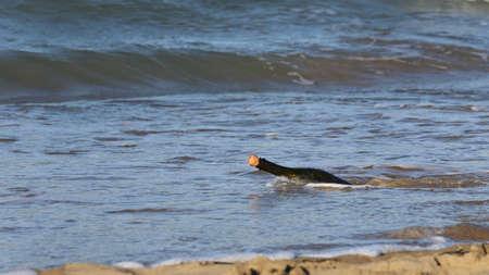 castaway: Secret Message in the bottle on the beach of ocean