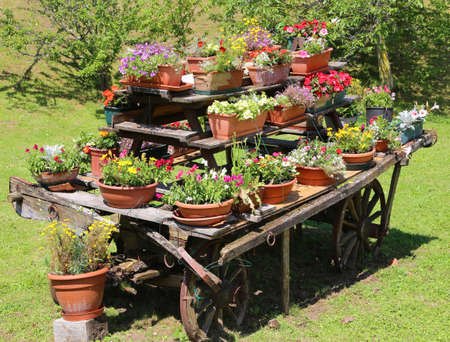 festooned: chariot  with many pots of flowers in the meadow in the mountains Stock Photo