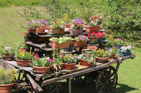 festooned: very old wooden wagon decorated with many pots of flowers in the meadow in the mountains