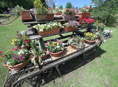 festooned: very old wooden cart festooned with many pots of flowers in the meadow in mountains