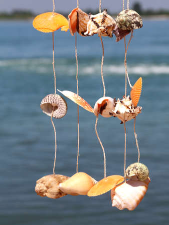 craft object with rare shells hanging from a wire to decorate the home