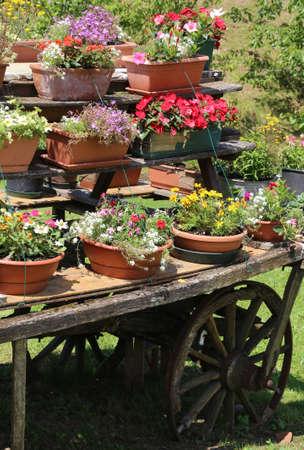carreta madera: detalle de un carro de madera con macetas de flores en verano