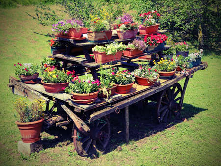 festooned: very old wooden cart festooned with many pots of flowers