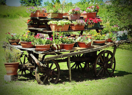 festooned: very old wooden wagon festooned with many pots of flowers Stock Photo
